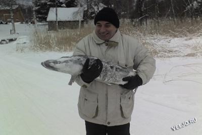 http://veljo.ru/forfoto/fish/schooko1.jpg