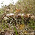 грибы растут
