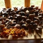 море грибов