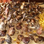 сушим грибы